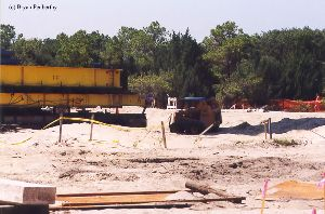 DURING MOVE: A Bobcat at the site.